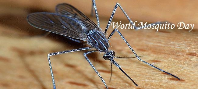 Παγκόσμια Ημέρα κατά των κουνουπιών